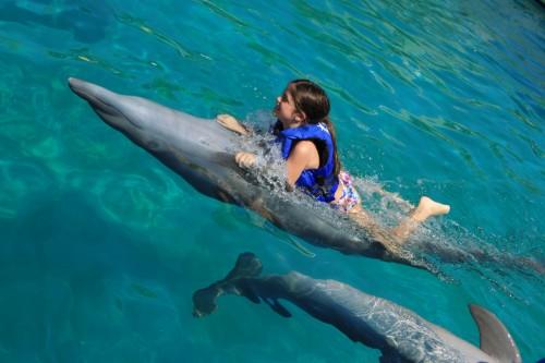 Um nado com Golfinhos em Puerto Valarta - México Pacífico