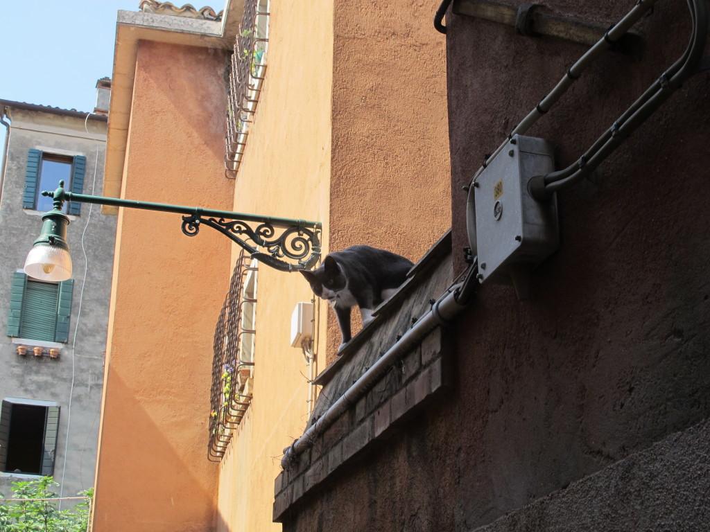 A gente sempre acha um gatinho fofo em qualquer lugar do mundo... e amigável também... tanto quanto o Mauro naquele momento!