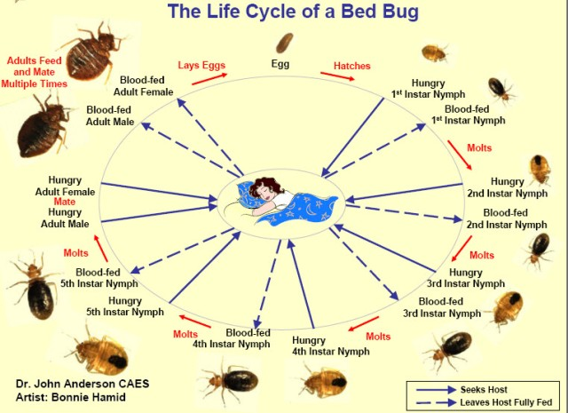 Imagem do Site bed-bugs-handbook