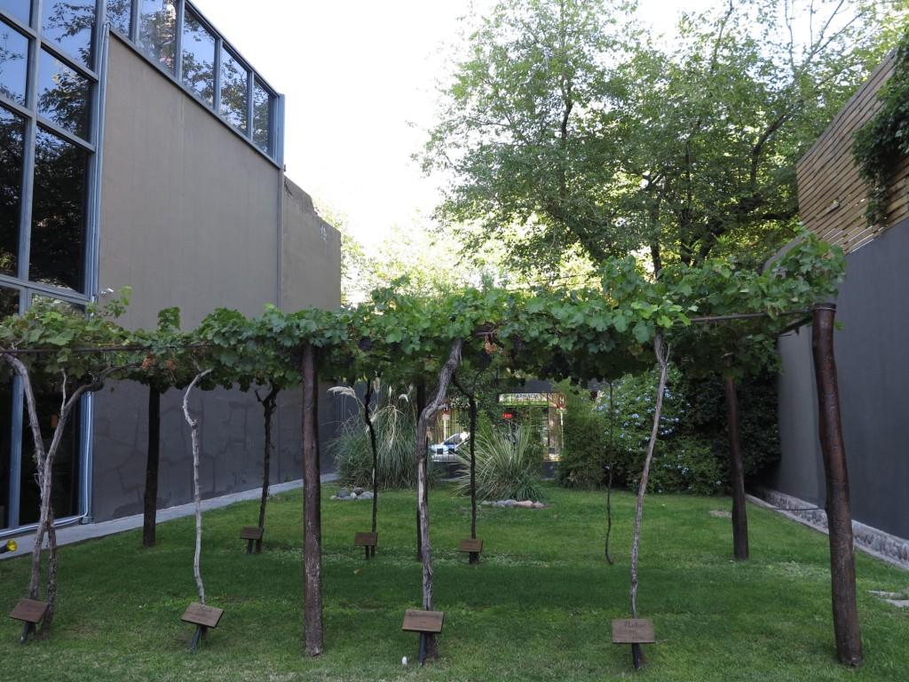 Um parreiral com diversos tipos de uva, um charme.