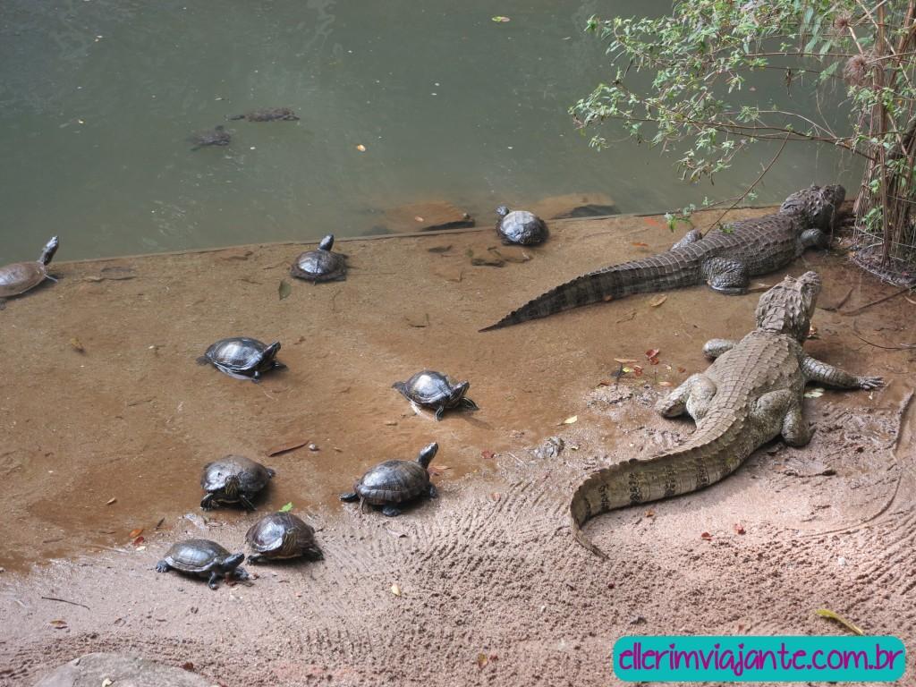 Parque Zoobotânico de Joinville - tartarugas de ouvido vermelho e jacarés-de-papo-amarelo.