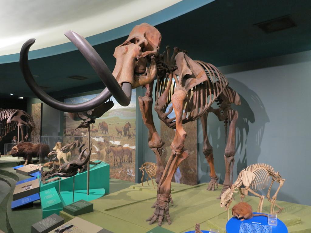 Amamos as exposições do Museu Nacional de História Natural