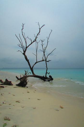As principais e mais bonitas praias para serem visitadas são a Praia 5 e 7.