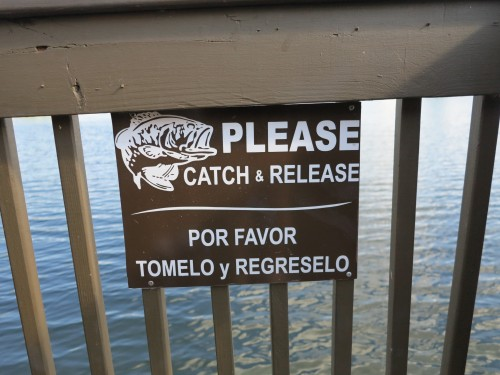 É permitido pescar no lago, desde que você devolva os peixes
