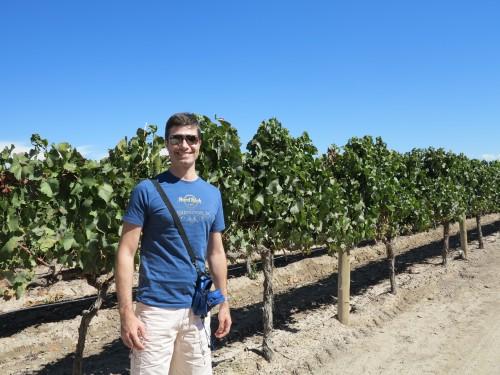 Chegando na vinícola pelo caminha das parreiras e oliveiras!