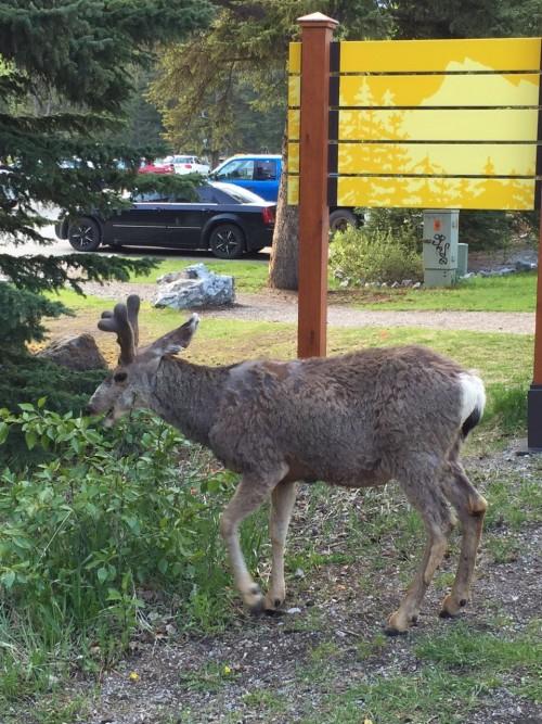 Surpesas pelo caminho em Banff