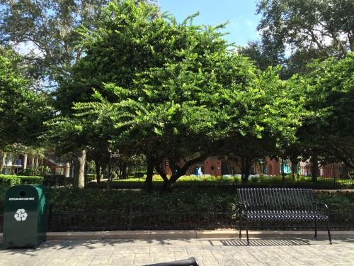 Bancos e árvores por todo hotel